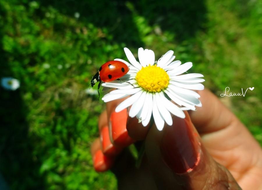 coccinelle fleur main